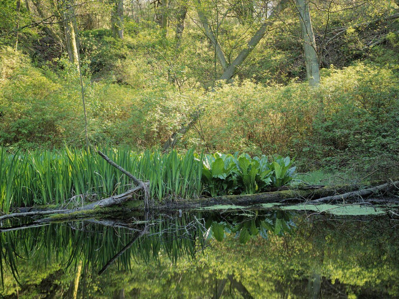 Discovery Park Habitat Project